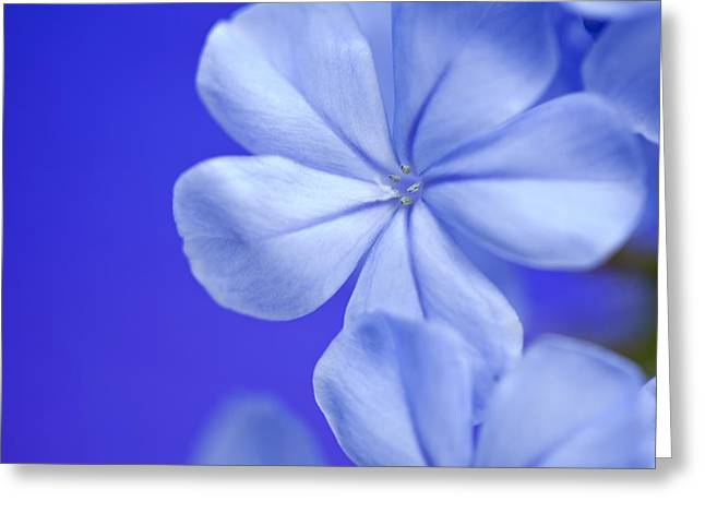 Blue Study 2 Greeting Card by Al Hurley