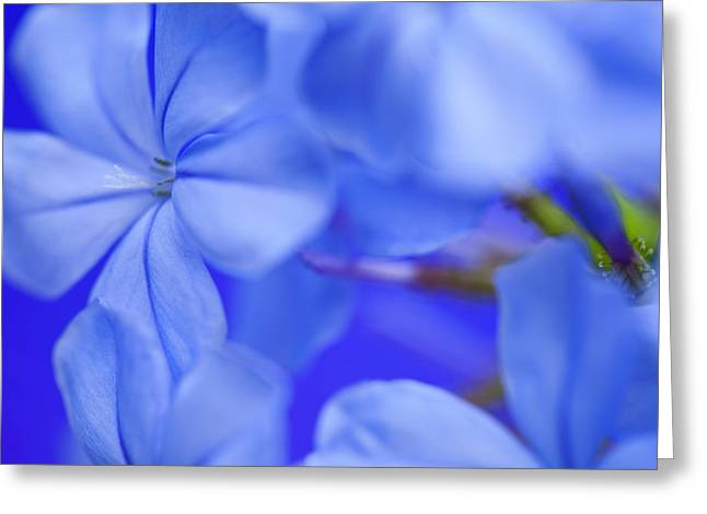 Blue Study 3 Greeting Card by Al Hurley