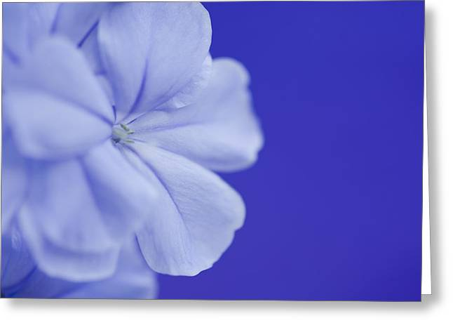 Blue Study 4 Greeting Card by Al Hurley