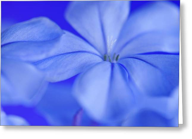Blue Study1 Greeting Card by Al Hurley