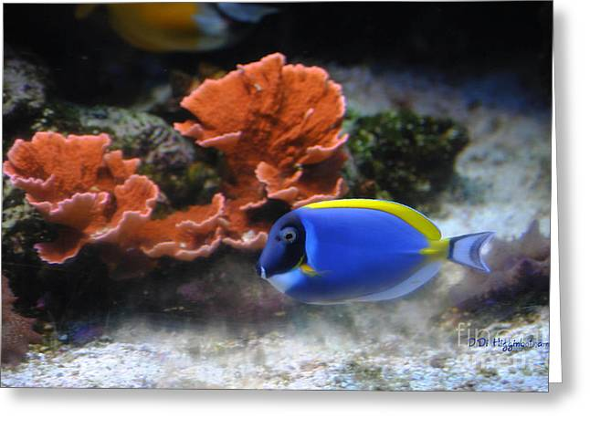 Blue Tang And Coral Greeting Card by DiDi Higginbotham