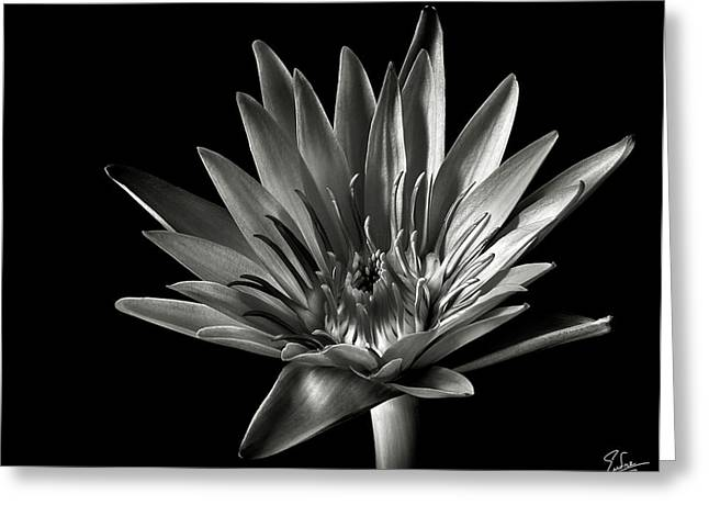 Greeting Card featuring the photograph Blue Water Lily In Black And White by Endre Balogh