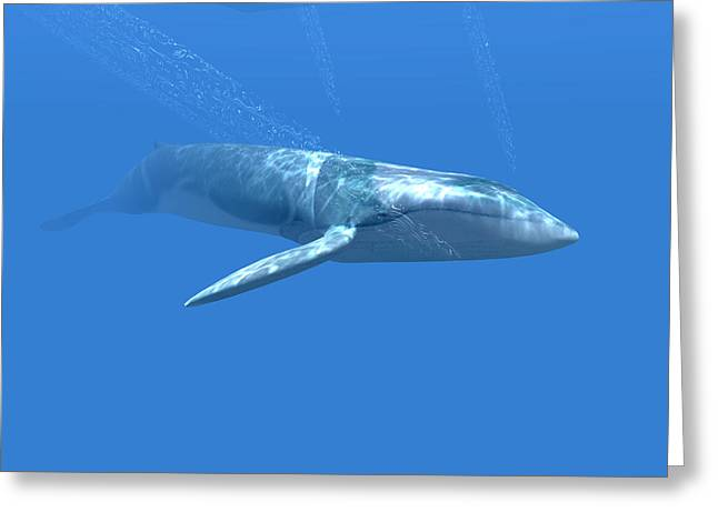 Blue Whale Greeting Card by Christian Darkin