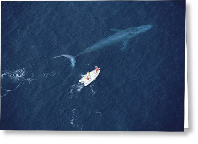 Blue Whale With Research Boat Santa Greeting Card