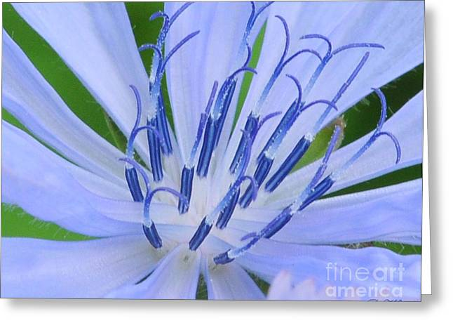 Blue Wild Flower Greeting Card by Paul Ward