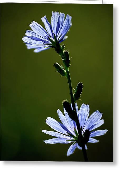Blue Wildflower Greeting Card by  Onyonet  Photo Studios