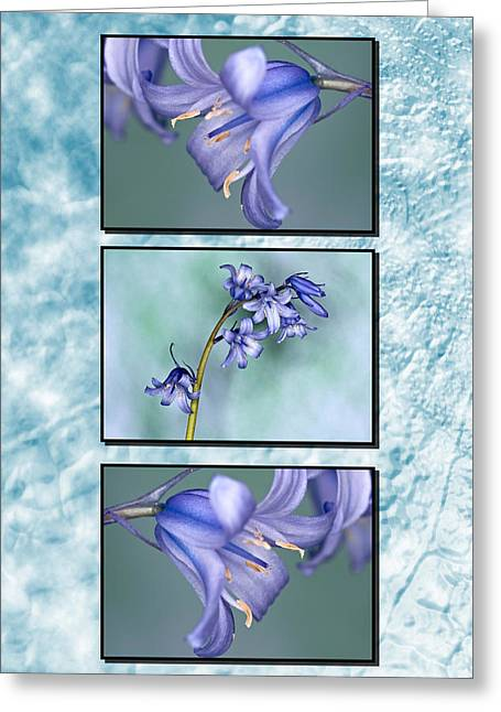 Greeting Card featuring the photograph Bluebell Triptych by Steve Purnell