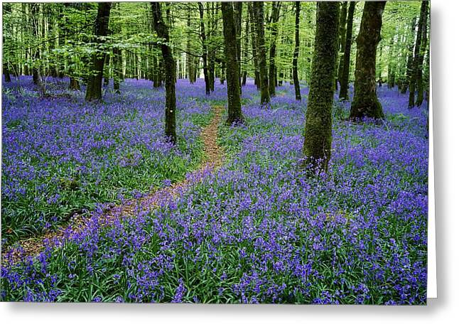 Bluebell Wood, Near Boyle, Co Greeting Card by The Irish Image Collection