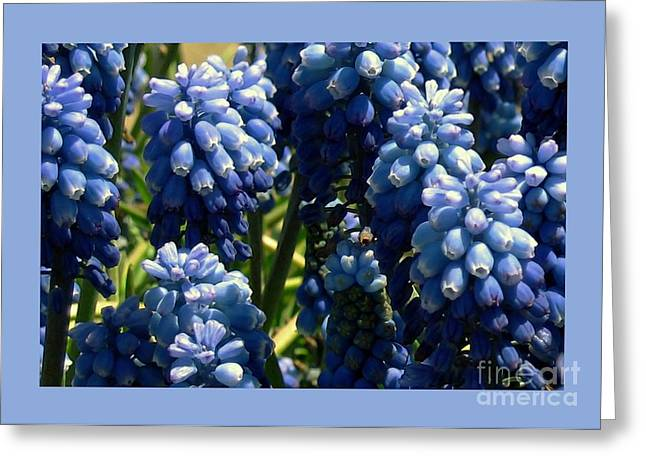 Bluebells Greeting Card by Dale   Ford