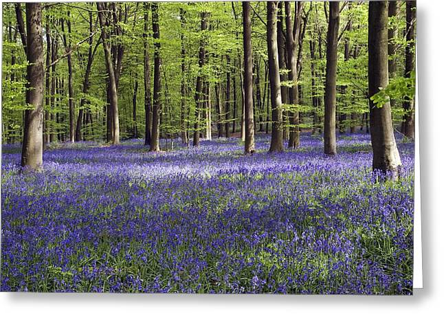 Bluebells In Woodland Greeting Card by Adrian Bicker