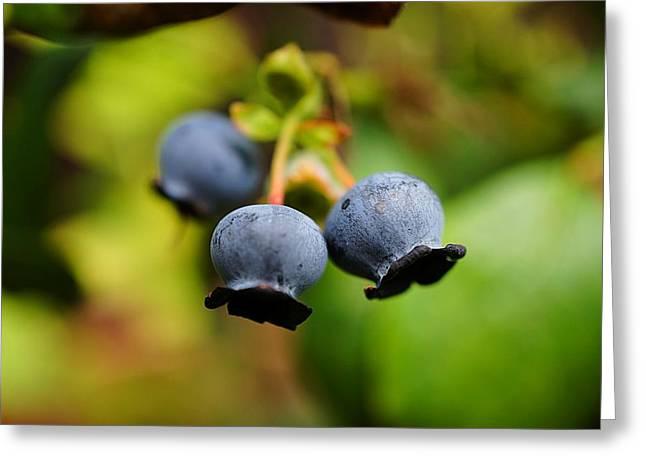 Blueberries Greeting Card by Beth Akerman
