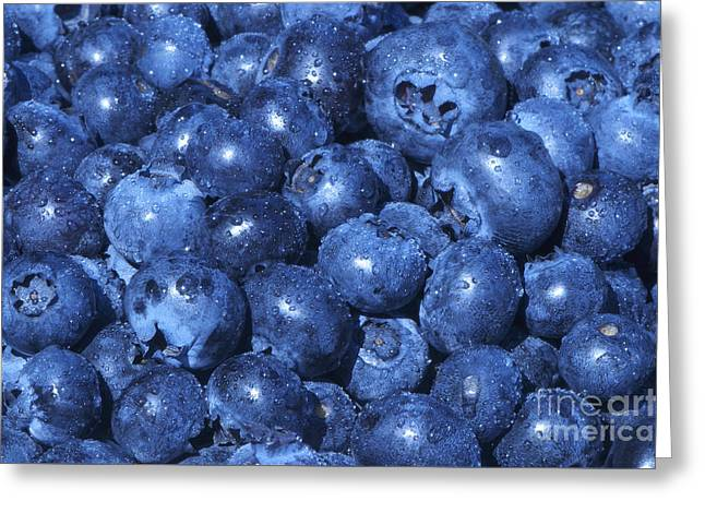 Blueberries With Waterdrops Greeting Card by Sharon Talson