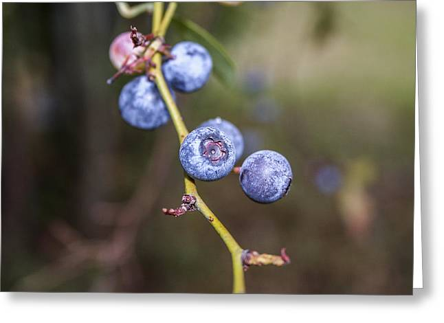 Greeting Card featuring the photograph Blueberry by Ester  Rogers