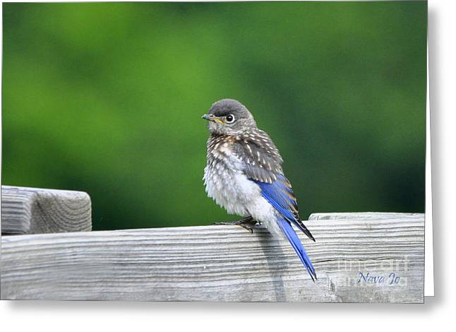 Greeting Card featuring the photograph Bluebird Baby by Nava Thompson
