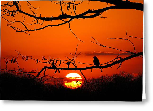Bluebird Dawn Greeting Card