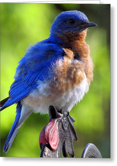 Bluebird On Weathervane II Greeting Card by Betty Pieper