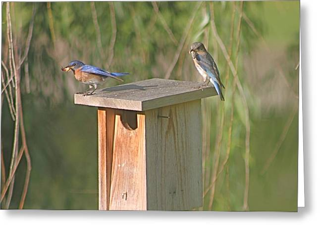 Bluebird Snack Time Greeting Card