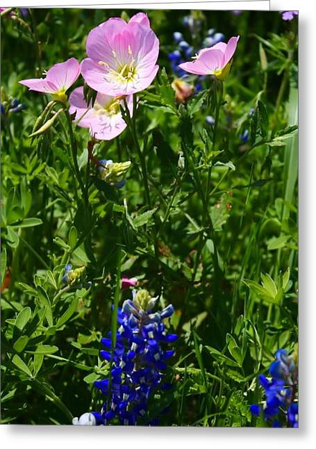 Greeting Card featuring the photograph Bluebonnets And Buttercups by Lynnette Johns