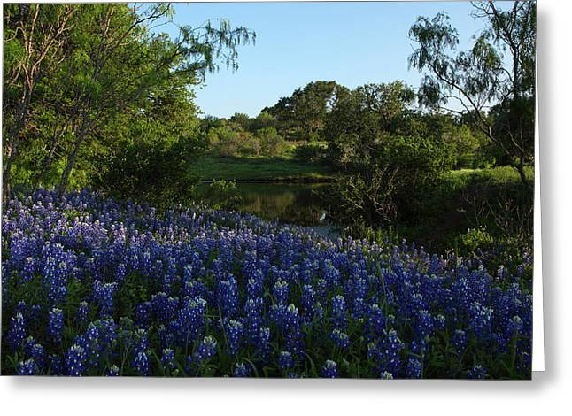 Greeting Card featuring the photograph Bluebonnets At The Pond by Susan Rovira
