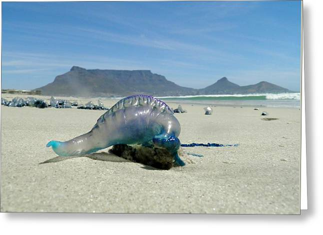 Greeting Card featuring the photograph Bluebottle by Werner Lehmann