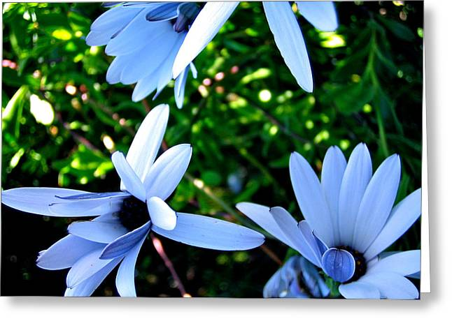Bluey Twinkles Greeting Card by HweeYen Ong