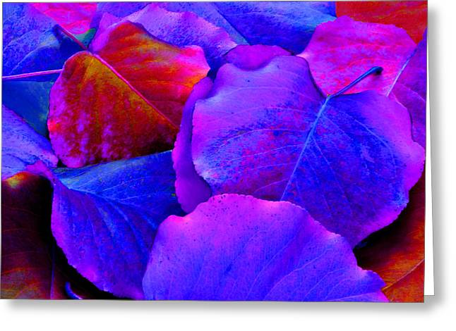 Bluish Purple And Pink Leaves Greeting Card by Sheila Kay McIntyre