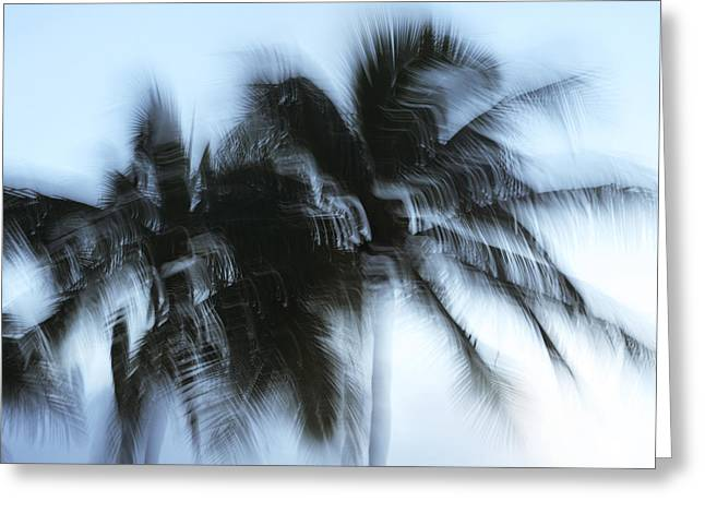 Blurred Palm Trees Greeting Card by Vince Cavataio - Printscapes