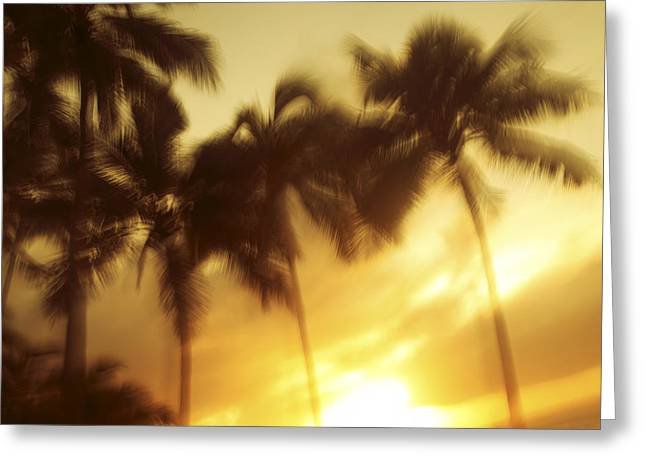 Blurred Palms At Sunset Greeting Card by Vince Cavataio - Printscapes