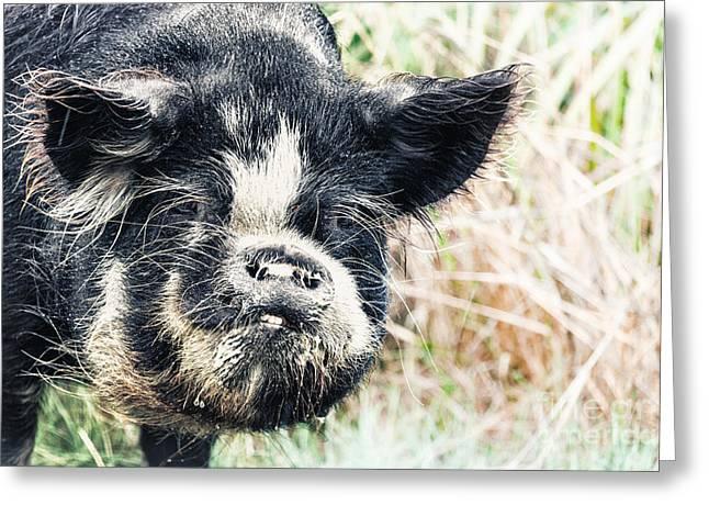 Boar Greeting Card by MotHaiBaPhoto Prints