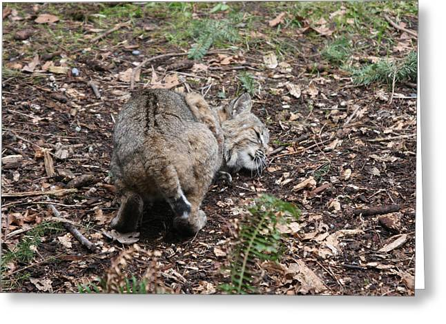 Greeting Card featuring the photograph Bobcat - 0014 by S and S Photo
