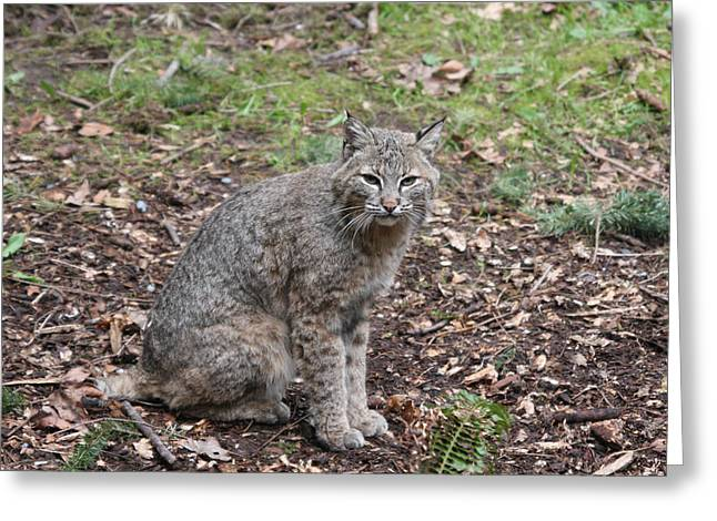 Greeting Card featuring the photograph Bobcat - 0017 by S and S Photo