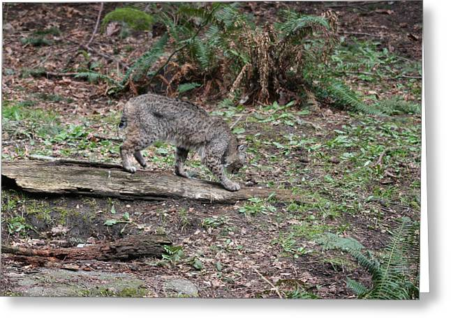 Greeting Card featuring the photograph Bobcat - 0018 by S and S Photo