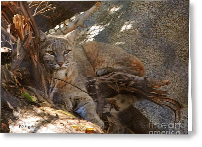 Bobcat Greeting Card by DiDi Higginbotham
