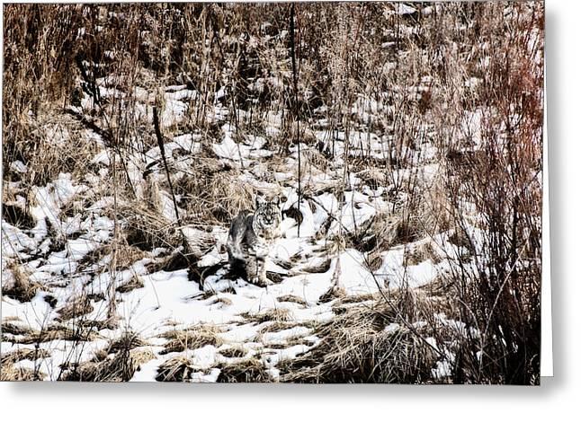 Greeting Card featuring the photograph Bobcat Winter by Britt Runyon