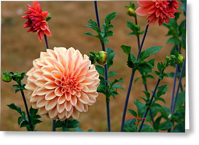 Greeting Card featuring the photograph Bodaciously Orange by Jeanette C Landstrom