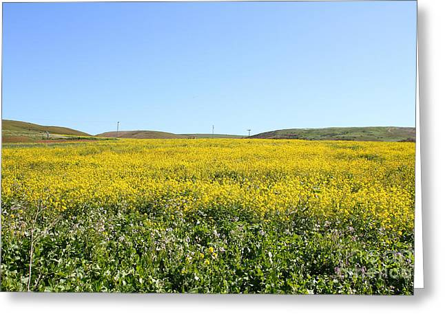 Bodega Bay . Yellow Field . 7d12403 Greeting Card by Wingsdomain Art and Photography