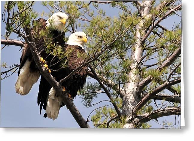 Bog River Eagles  Greeting Card
