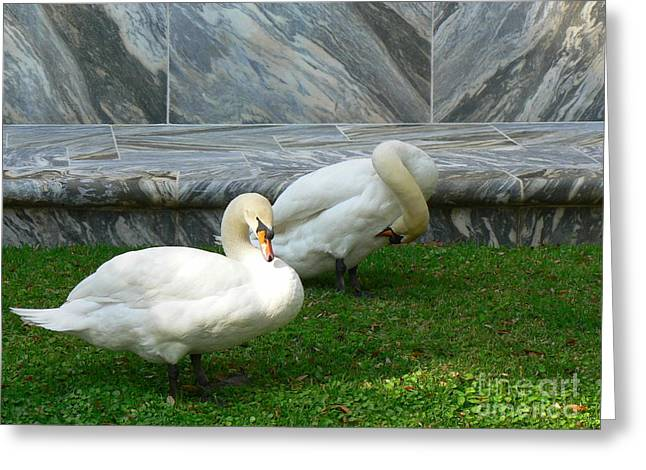 Bok Tower Swans Greeting Card