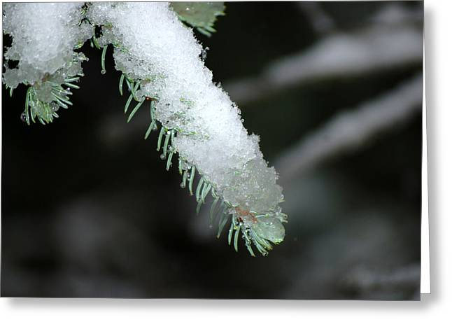 Bokeh Of Evergreen In Snow Greeting Card