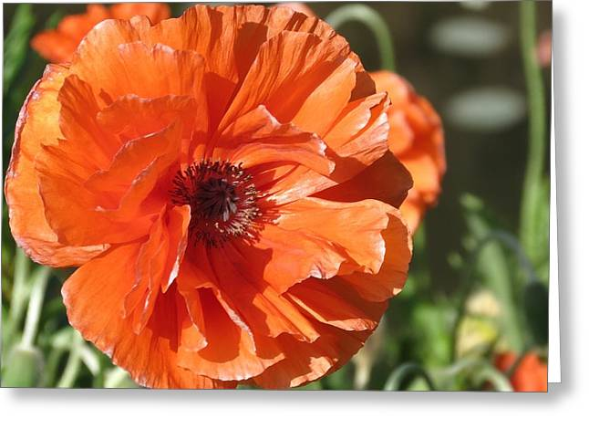 Bold Orange Poppy Greeting Card by Rebecca Overton