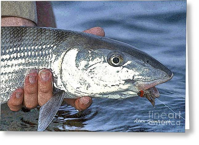 Tarpon Drawings Greeting Cards - Bonefish Slider Greeting Card by Alex Suescun