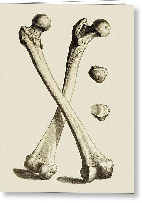 Bones Of The Leg Greeting Card by Mehau Kulyk