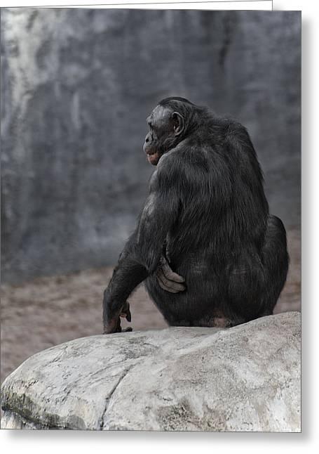 Bonobo Greeting Card by Wade Aiken