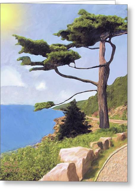 Boothbay Pine Greeting Card by Richard Stevens