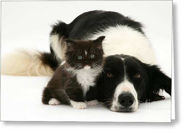 Border Collie And Kitten Greeting Card
