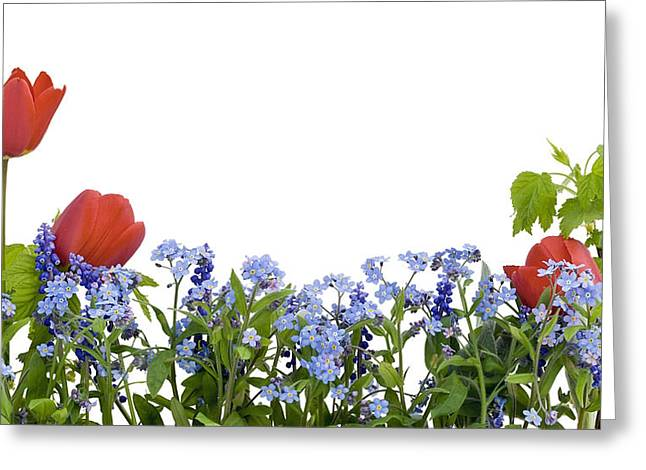 Greeting Card featuring the photograph Border From Myosotis And Tulips by Aleksandr Volkov