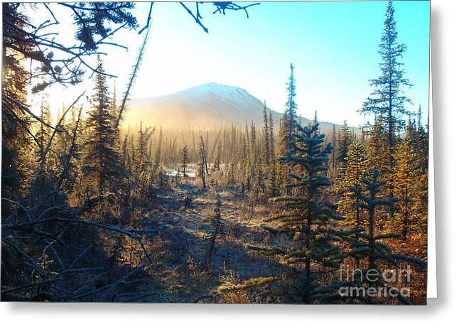 Boreal Forest Sunrise Greeting Card by Adam Owen
