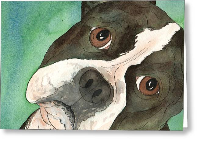 Boston Terrier Tilted Head Greeting Card by Cherilynn Wood