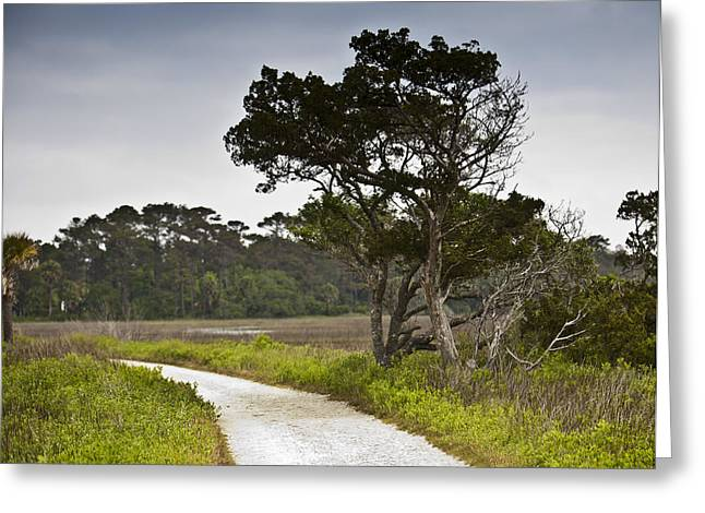 Botany Bay Pathway Tree Greeting Card