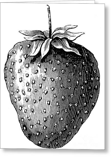 Botany: Strawberry Greeting Card by Granger